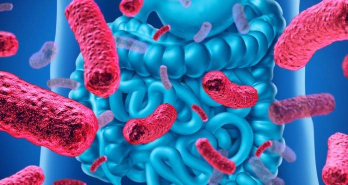 Prebiotics Probiotics difference