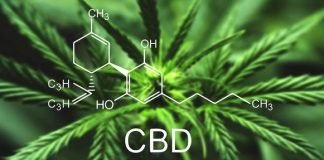 cbd health bodybuilding